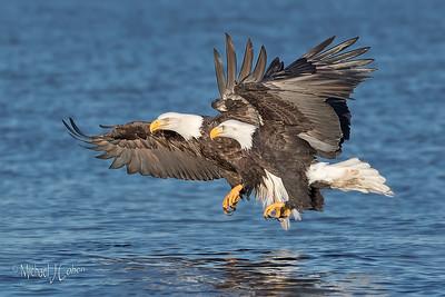 Homer Eagle Trip