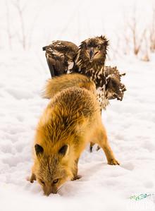 Food Fight 1