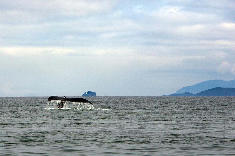 Whale Diving (1) - Alaska