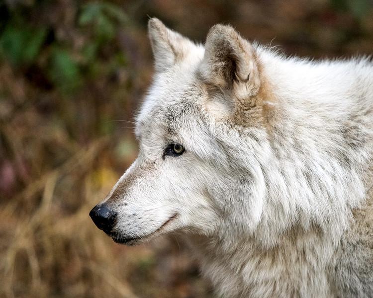 Lakota Wolf Preserve (6)