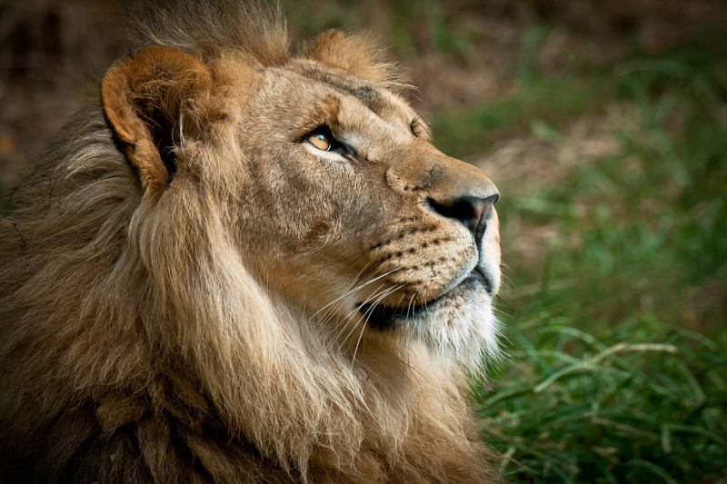 """Thoughts of Africa"" - Pittsburgh Zoo   Recommended Print sizes*:  4x6  