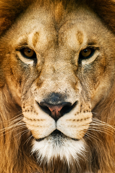"""Pride"" - Living Treasures   Recommended Print sizes*:  4x6  