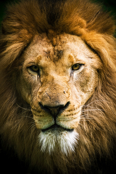 """Soul of the Serengeti"" - Pittsburgh Zoo   Recommended Print sizes*:  4x6  