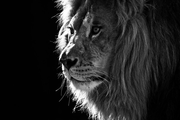 """""""Shadow of the King"""" - Living Treasures   Recommended Print sizes*:  4x6  