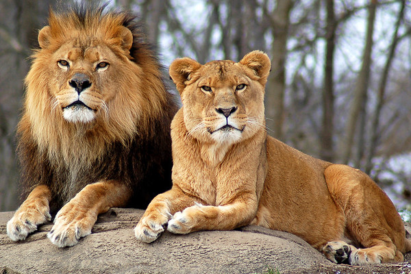 """""""Royal Couple"""" - Pittsburgh Zoo   Recommended Print sizes*:  4x6  