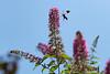 Hummingbird & butterfly - July 2021