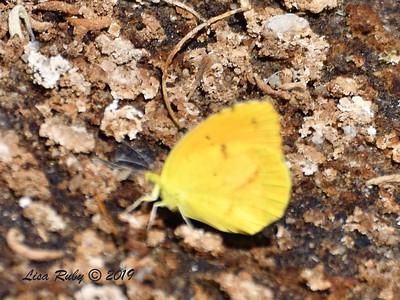 Not sure yet - 4/13-2019 - Agua Caliente County Park Marsh Trail