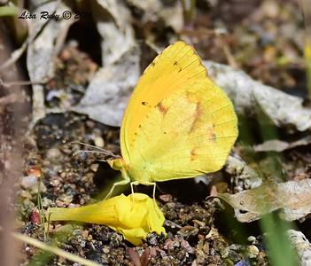 ? - 4-18-2016 - McDowell Sonoran Preserve, Scottsdale Az