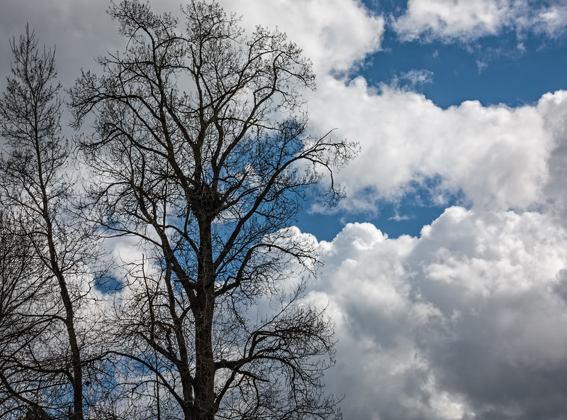 Eagle's Nest in Tree