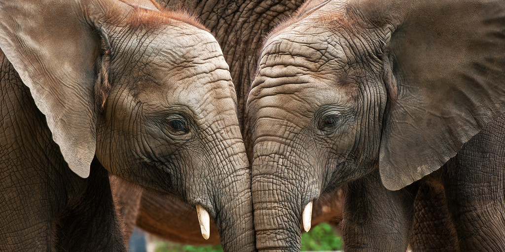 """Touchin' Trunks"" - Pittsburgh Zoo   Recommended Print sizes*:  4x8  