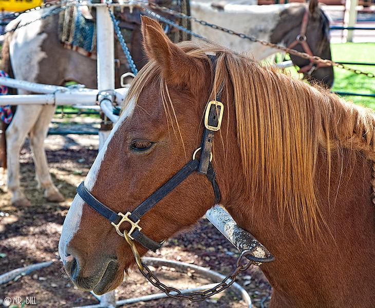 Pony ride @ Stockyards in Ft. Worth