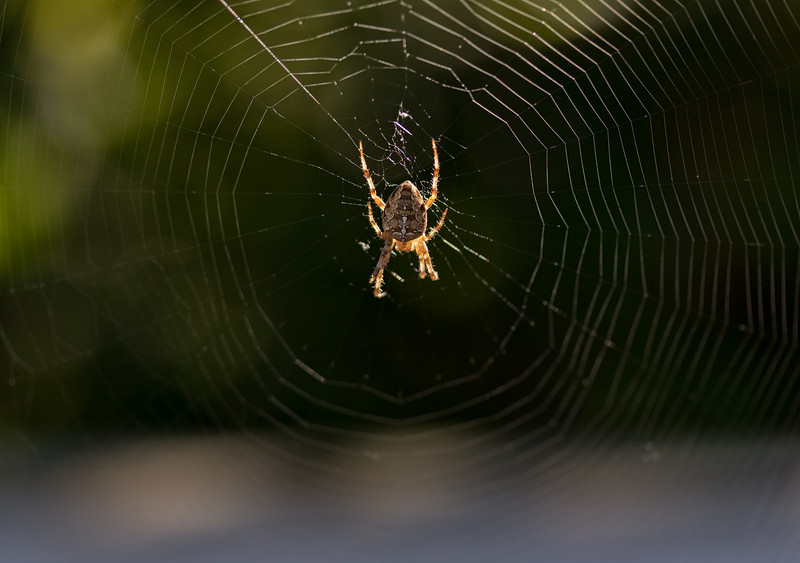 Spider 1a