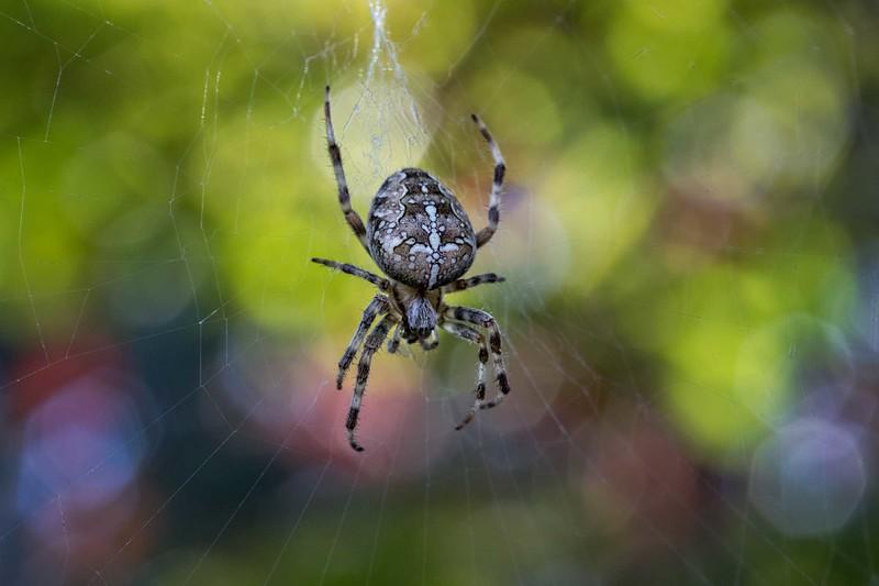 Spider 9