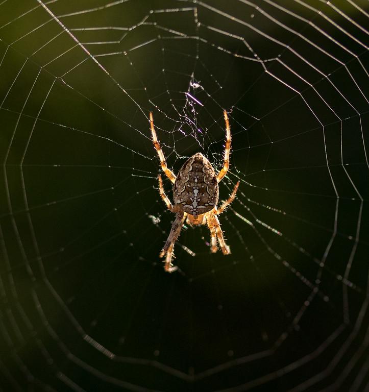 Spider 1b