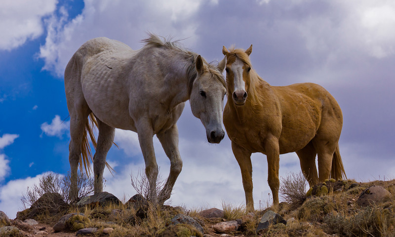 Wild, Wild Horses, We'll Ride Them Someday