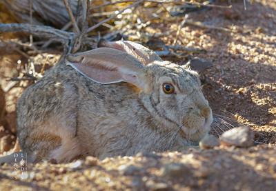 Wildlife Namibia 2017
