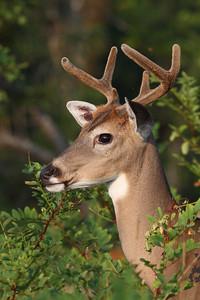 Taken at Shenandoah National Park