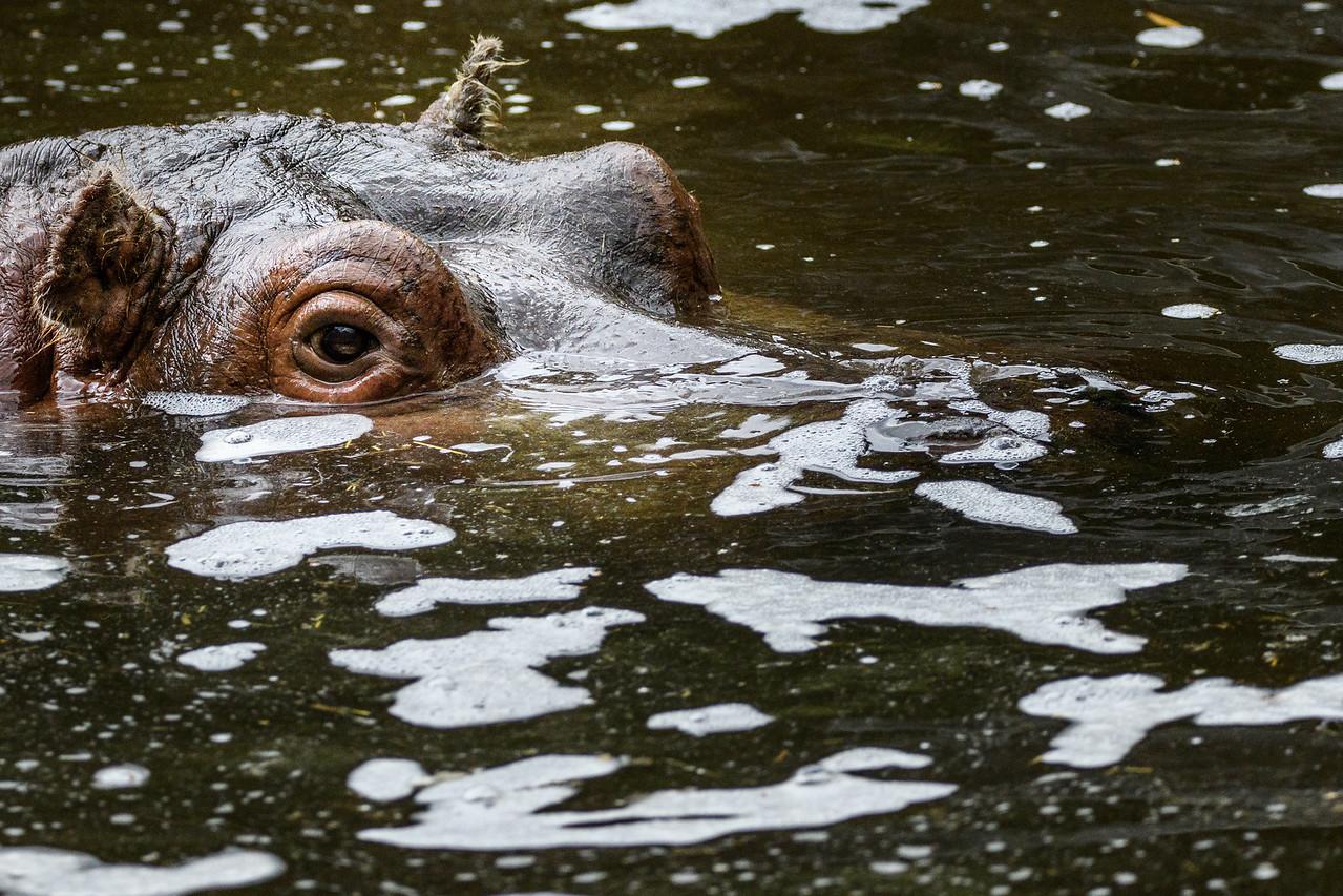 Zoo Amnéville Mai 17 - 047