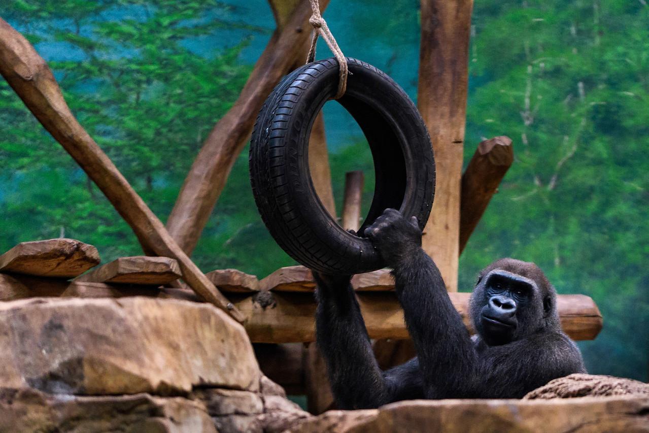 Zoo Amnéville Mai 17 - 060