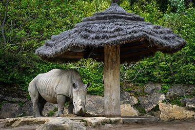 Zoo Amnéville Mai 17 - 036