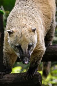 Zoo Amnéville Mai 17 - 004