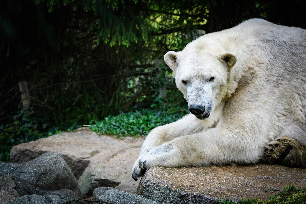 Zoo Amnéville Mai 17 - 057