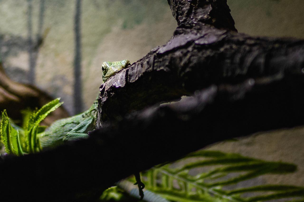 Zoo Amnéville Mai 17 - 065