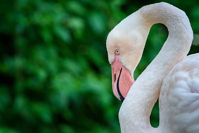 Zoo Amnéville Mai 17 - 007