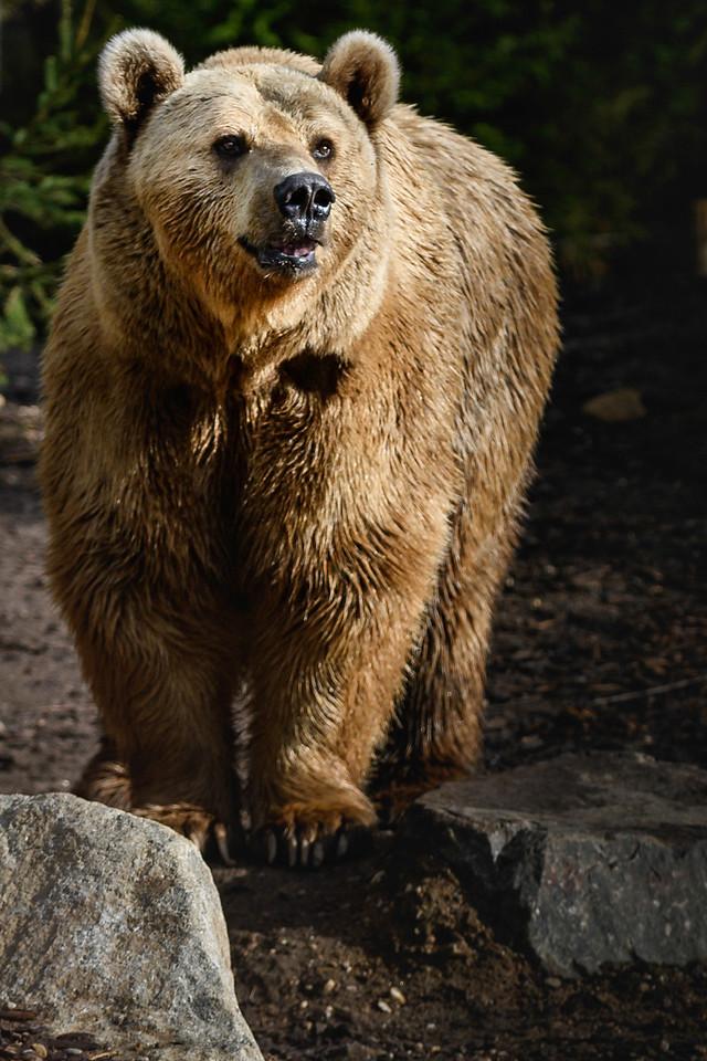 Zoo Amnéville Mai 17 - 090