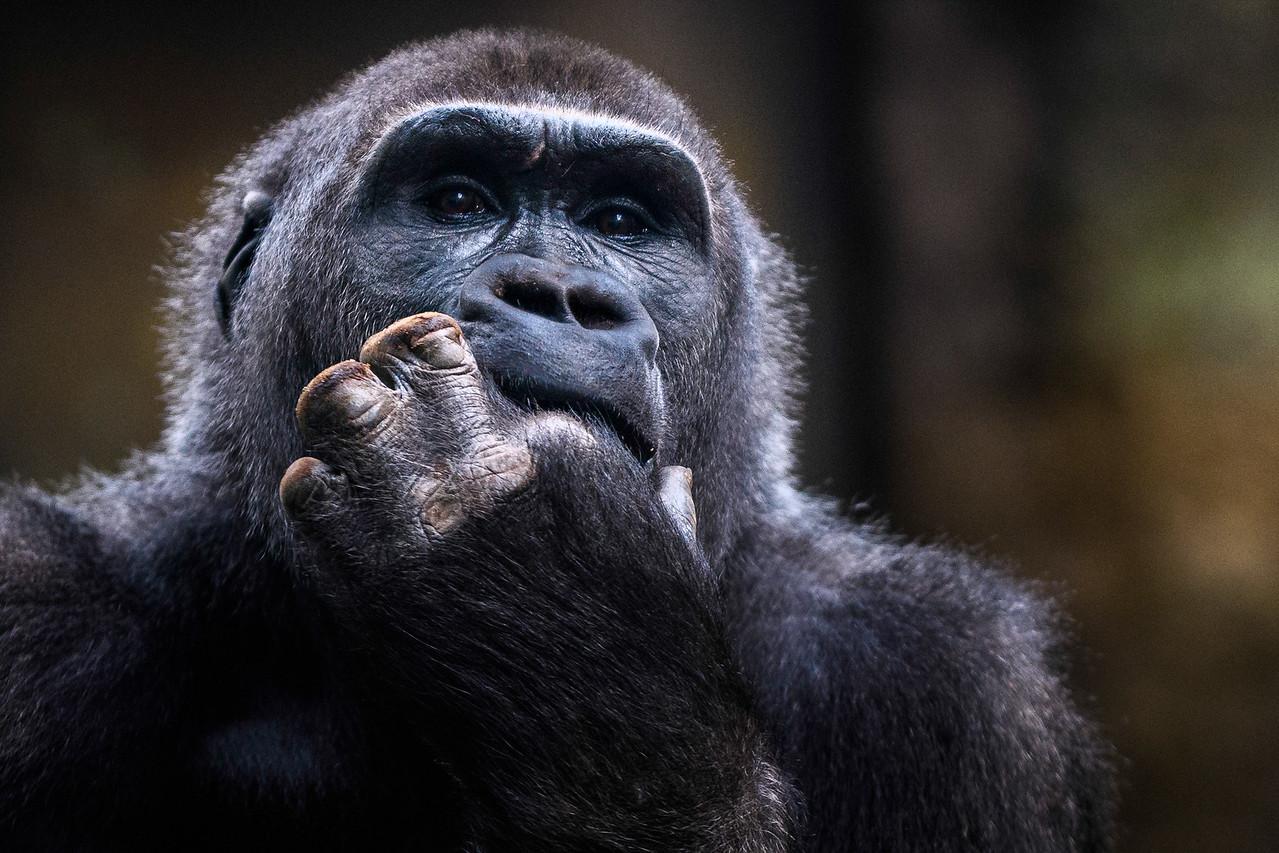 Zoo Amnéville Mai 17 - 063