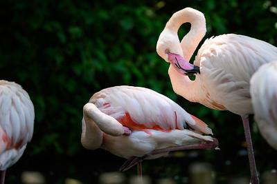Zoo Amnéville Mai 17 - 012