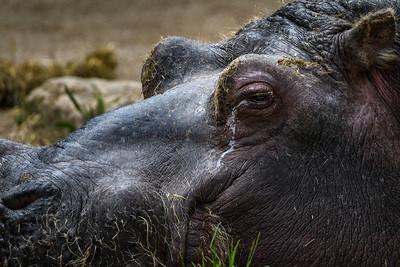 Zoo Amnéville Mai 17 - 016