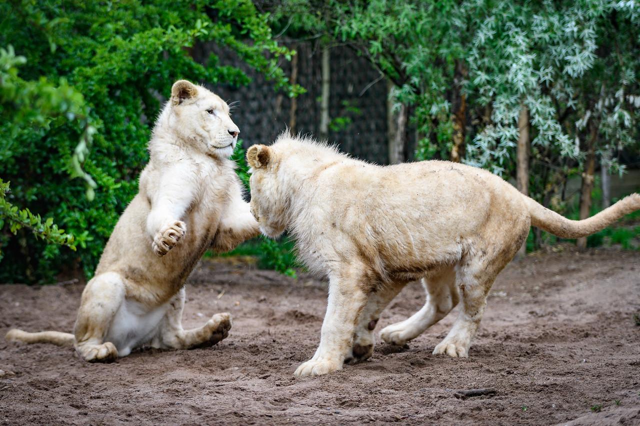 Zoo Amnéville Mai 17 - 086