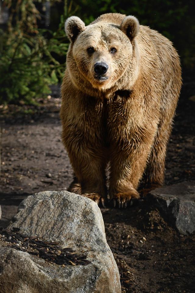 Zoo Amnéville Mai 17 - 089