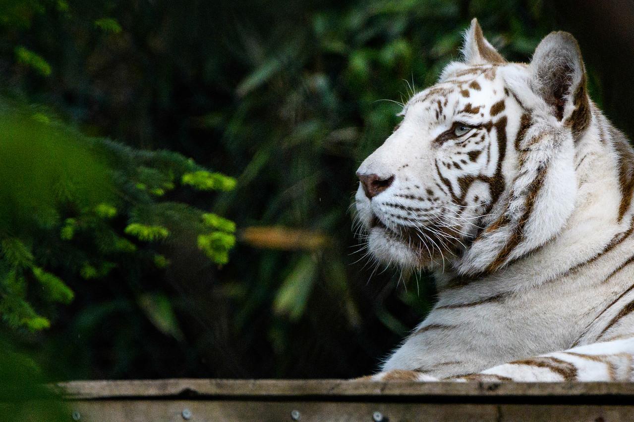 Zoo Amnéville Mai 17 - 055