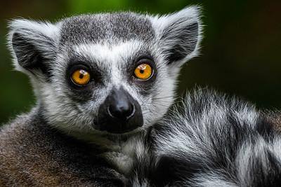 Zoo Amnéville Mai 17 - 018