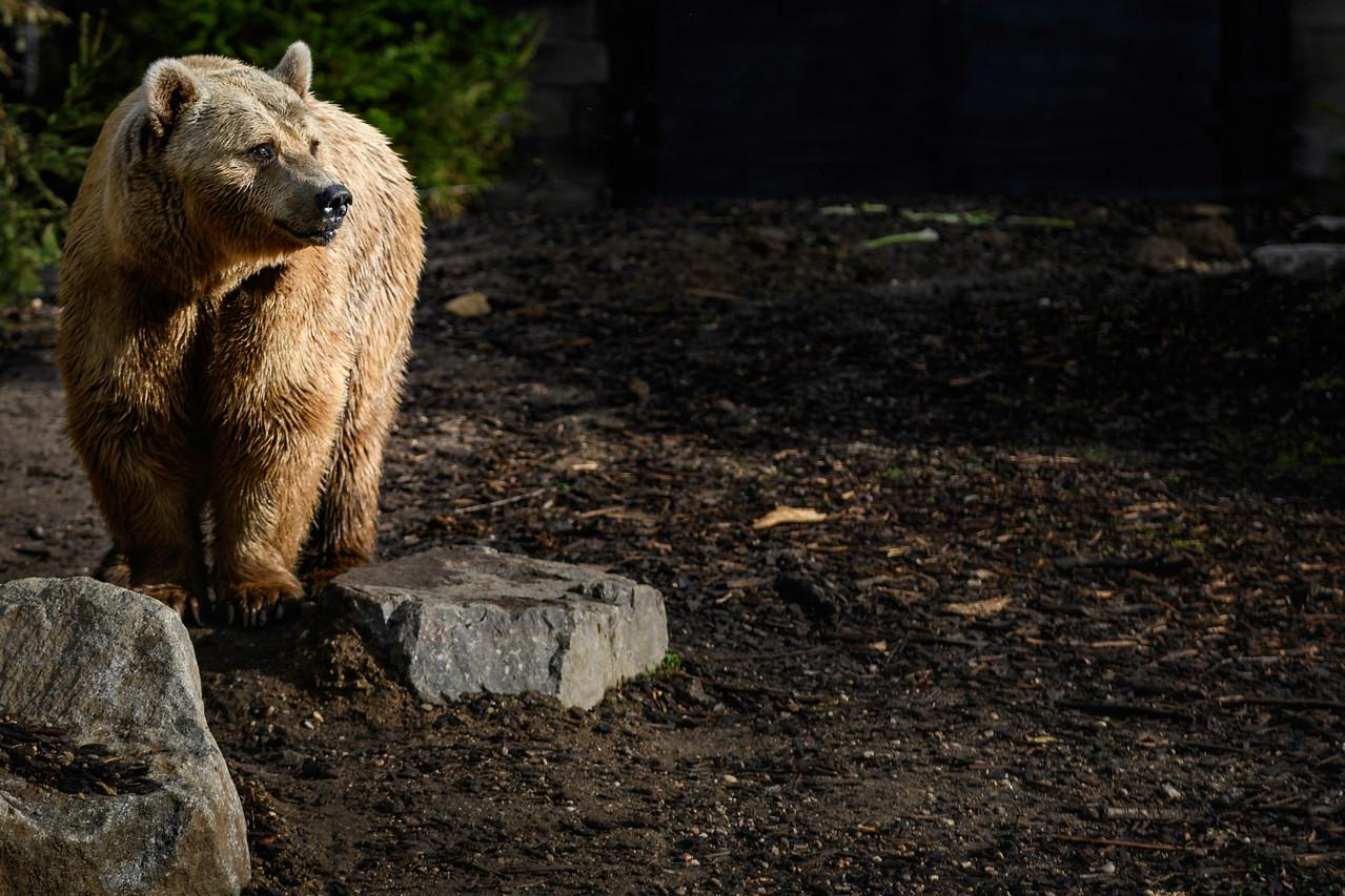 Zoo Amnéville Mai 17 - 088