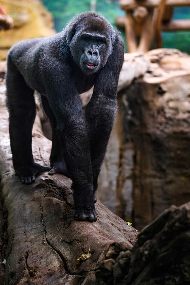 Zoo Amnéville Mai 17 - 061