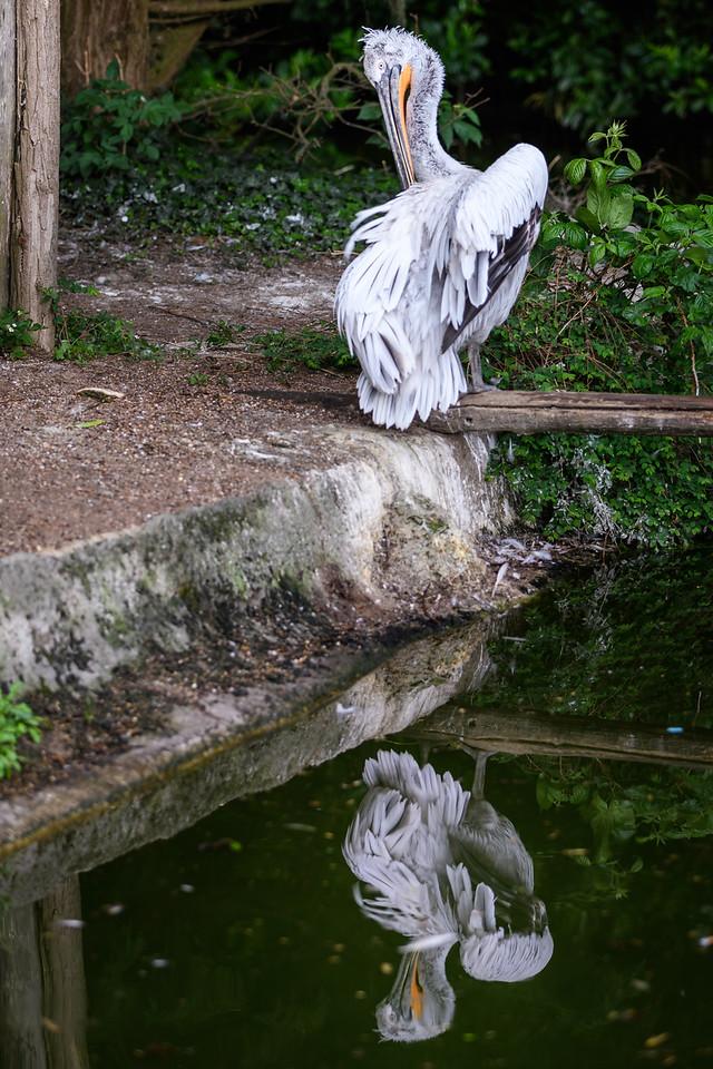 Zoo Amnéville Mai 17 - 081