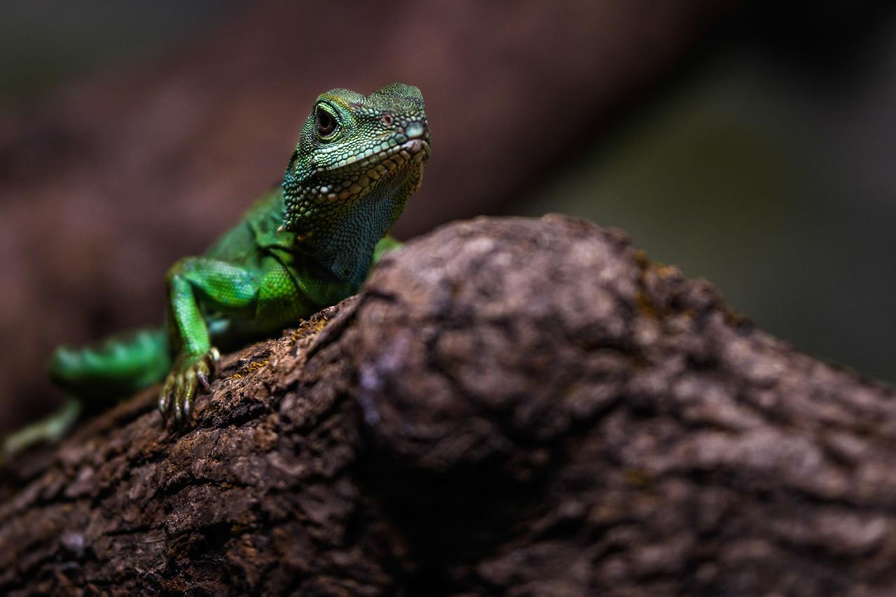 Zoo Amnéville Mai 17 - 074