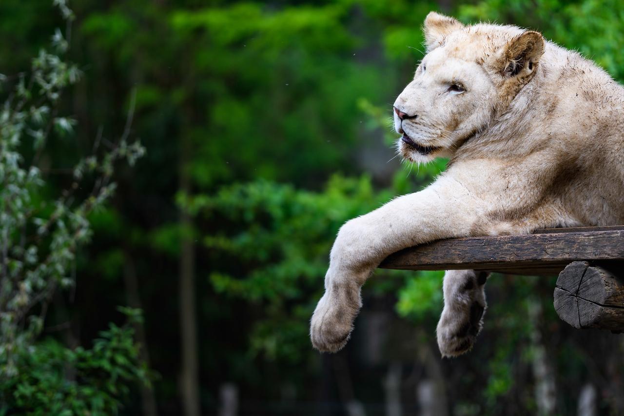 Zoo Amnéville Mai 17 - 084