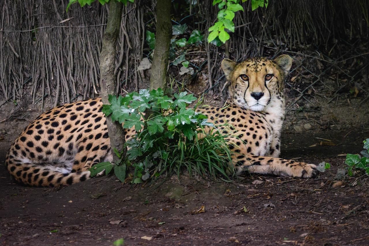 Zoo Amnéville Mai 17 - 051
