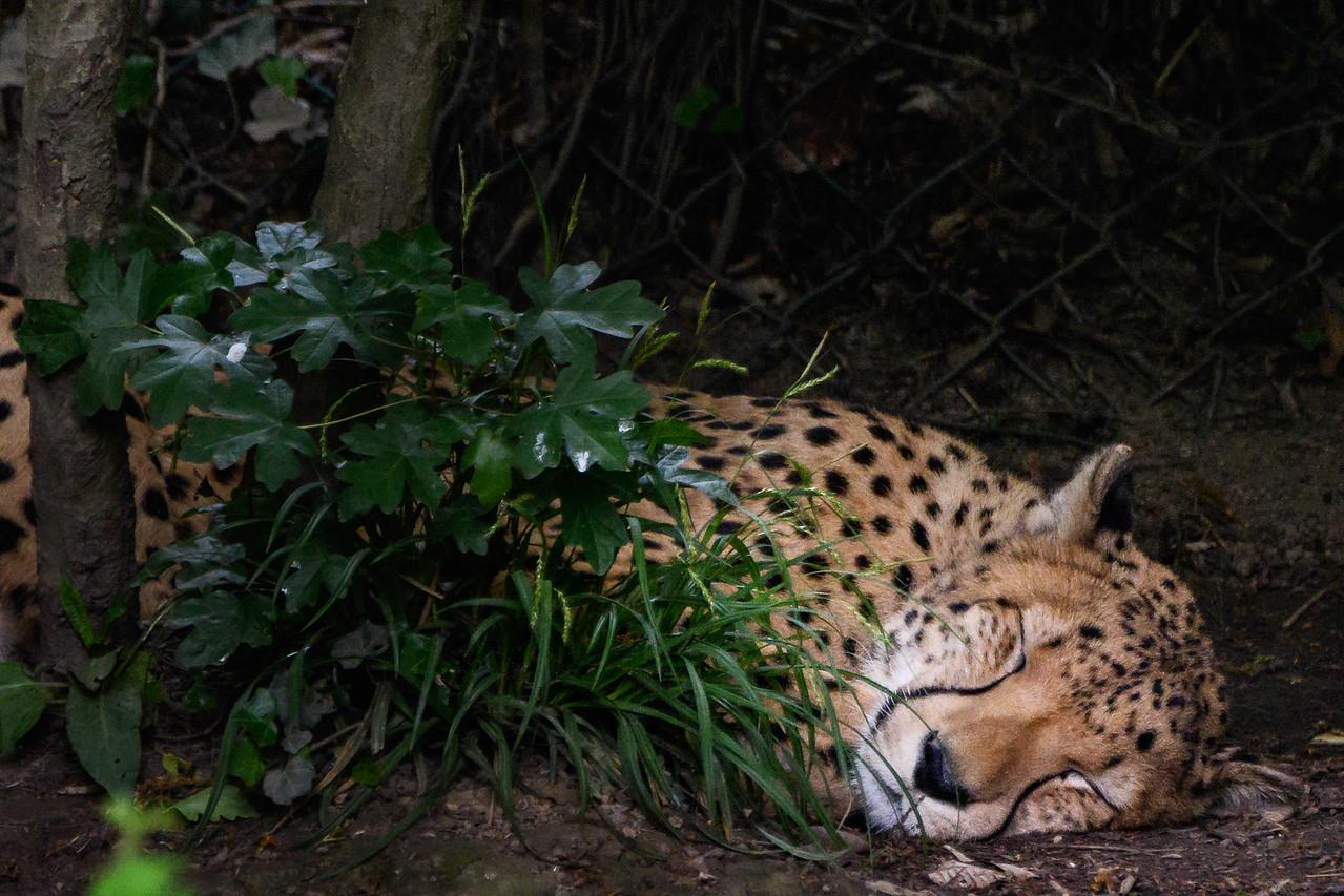 Zoo Amnéville Mai 17 - 053