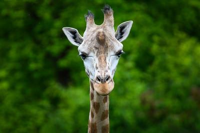 Zoo Amnéville Mai 17 - 043