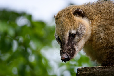Zoo Amnéville Mai 17 - 001