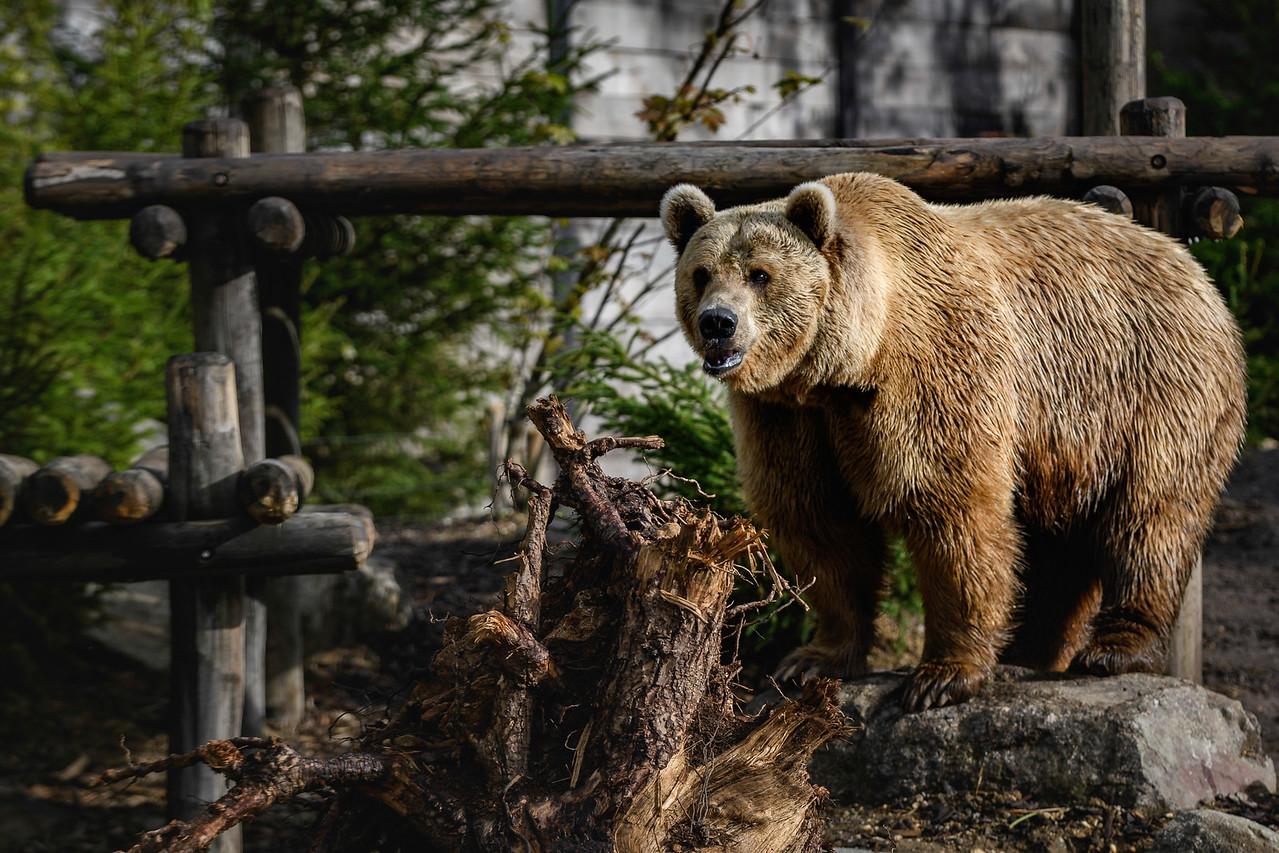 Zoo Amnéville Mai 17 - 087