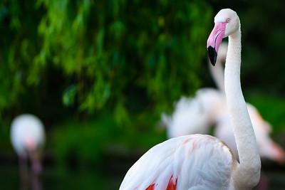 Zoo Amnéville Mai 17 - 011