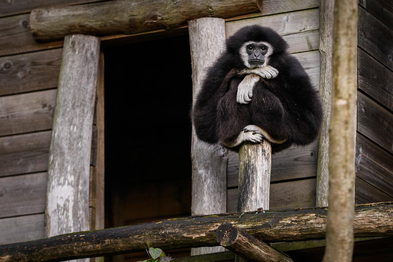 Zoo Amnéville Mai 17 - 080