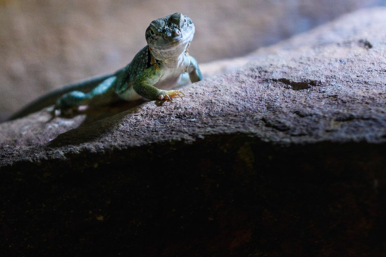 Zoo Amnéville Mai 17 - 070