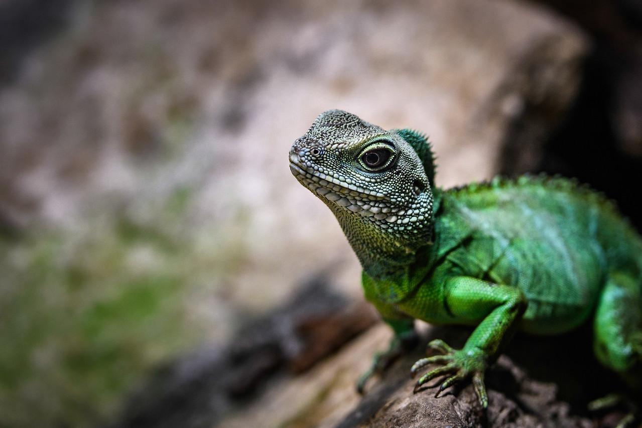 Zoo Amnéville Mai 17 - 076